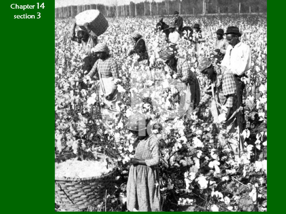 Chapter 14 section 3 The Cotton Kingdom
