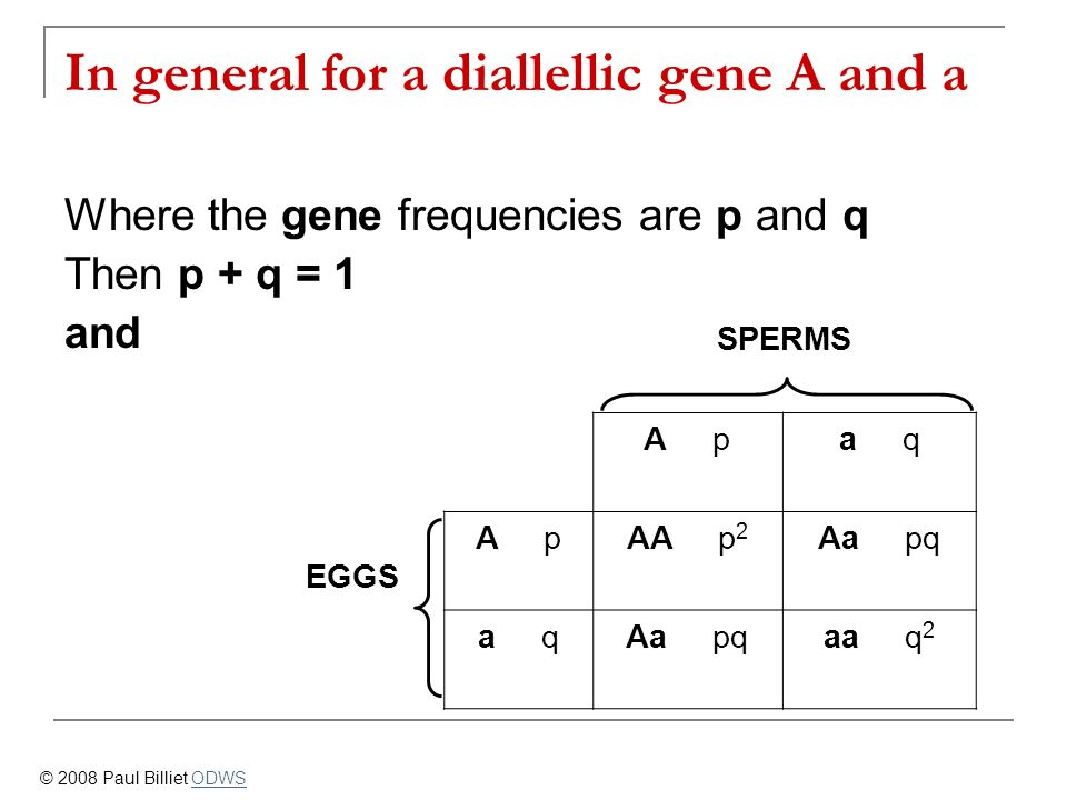 In general for a diallellic gene A and a