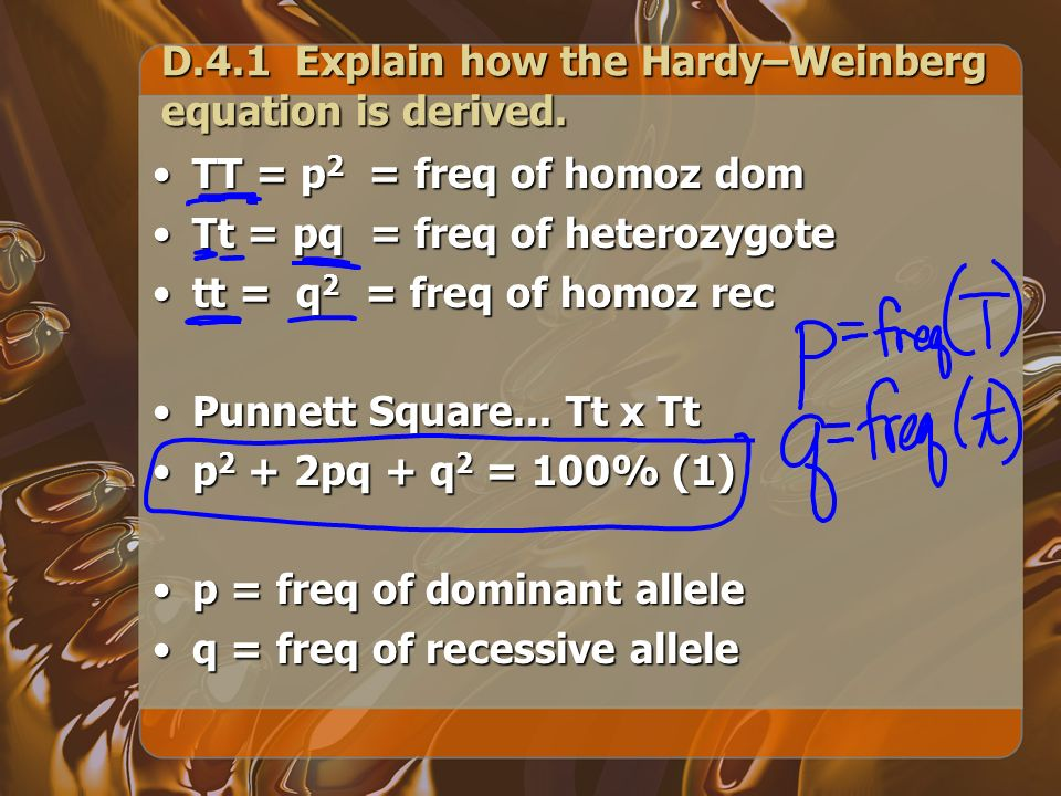 D.4.1 Explain how the Hardy–Weinberg equation is derived.