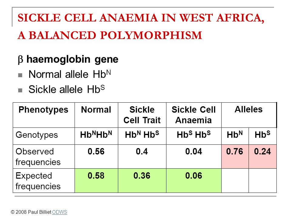 SICKLE CELL ANAEMIA IN WEST AFRICA, A BALANCED POLYMORPHISM