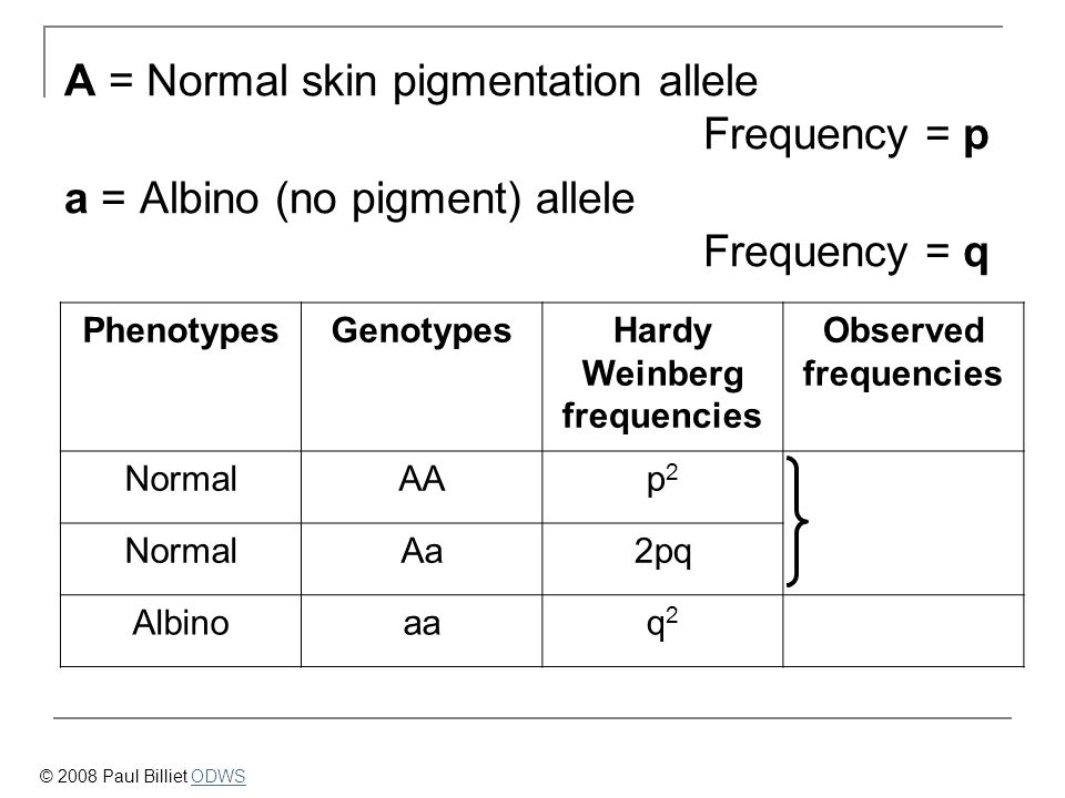 Hardy Weinberg frequencies