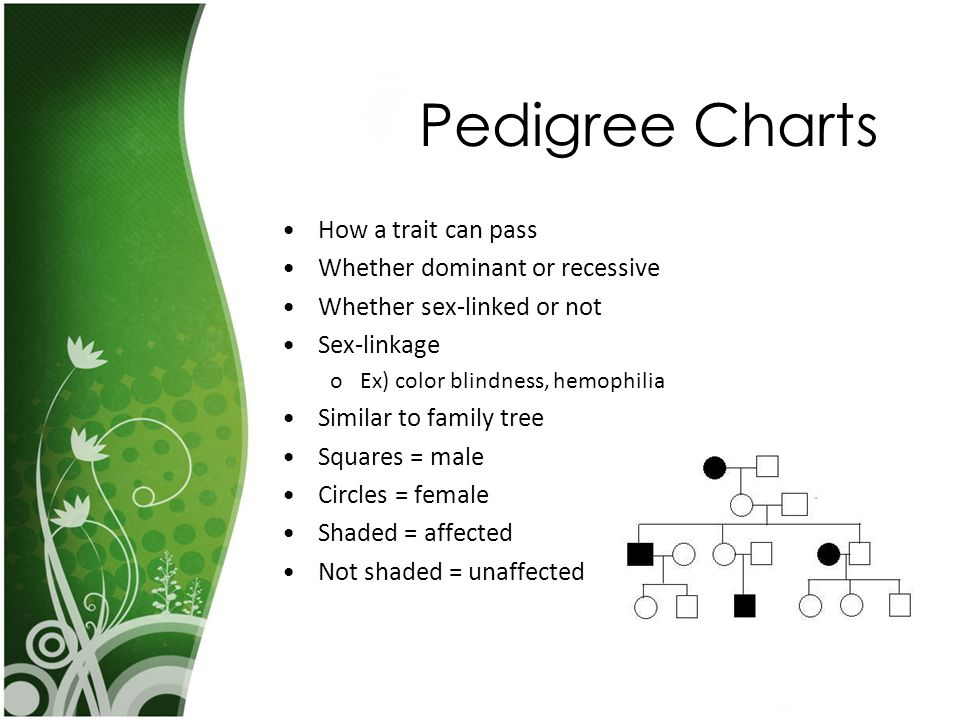 Pedigree Charts How a trait can pass Whether dominant or recessive