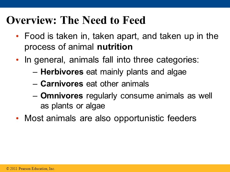 Overview: The Need to Feed