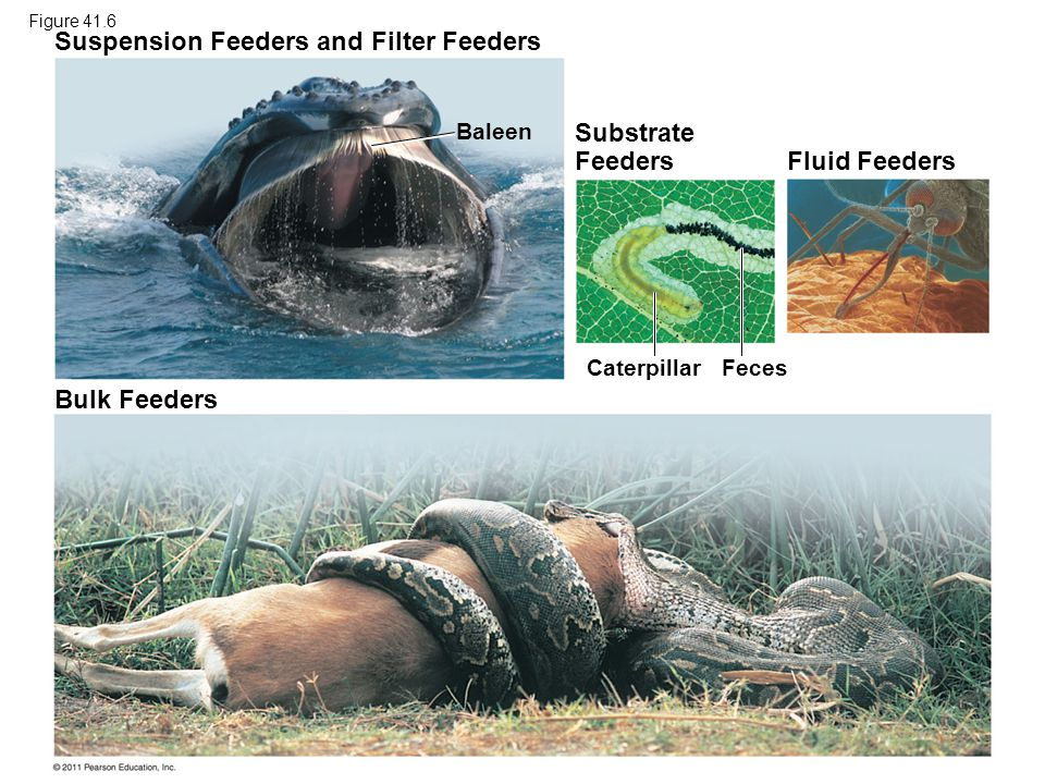 Suspension Feeders and Filter Feeders