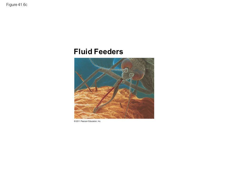 Figure 41.6c Fluid Feeders Figure 41.6 Exploring: Four Main Feeding Mechanisms of Animals