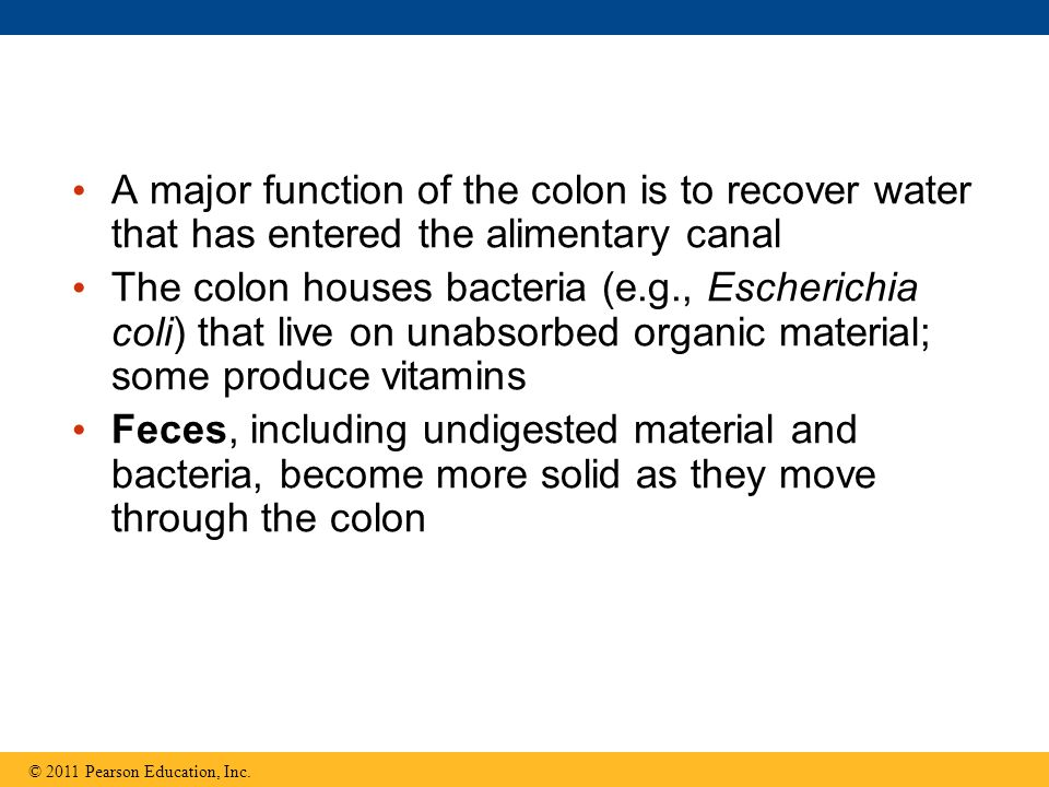 A major function of the colon is to recover water that has entered the alimentary canal