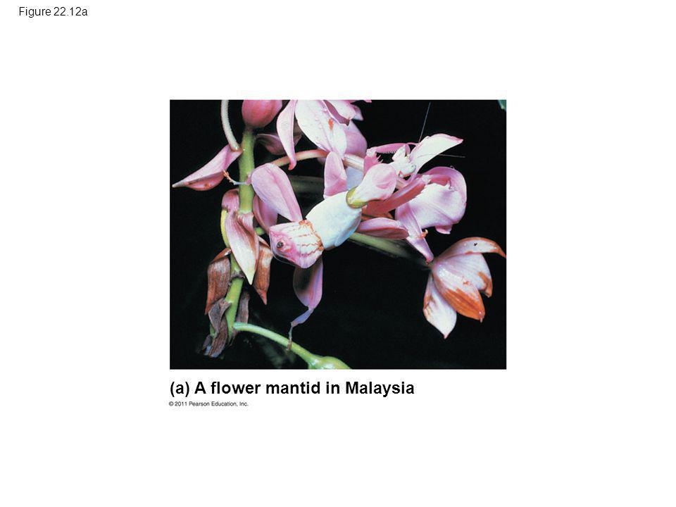 (a) A flower mantid in Malaysia