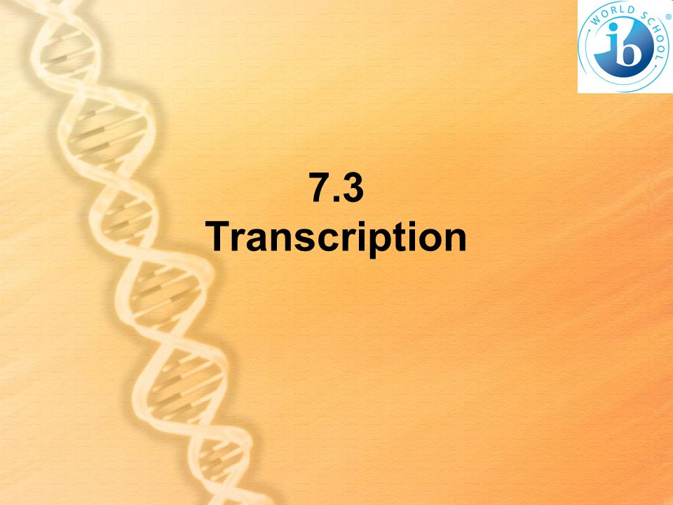 7.3 Transcription
