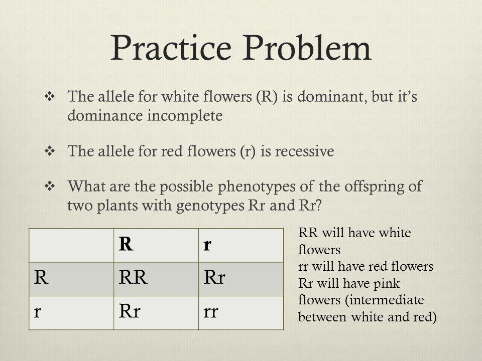 Practice Problem R r RR Rr rr