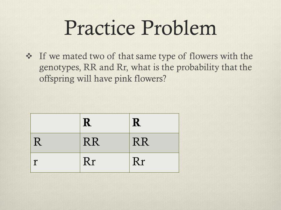 Practice Problem R RR r Rr