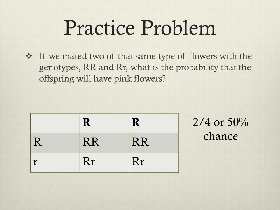 Practice Problem R RR r Rr 2/4 or 50% chance