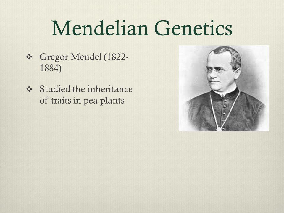 Mendelian Genetics Gregor Mendel (1822- 1884)