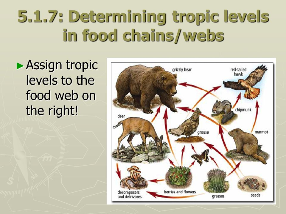 5.1.7: Determining tropic levels in food chains/webs