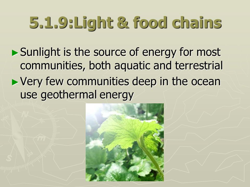 5.1.9:Light & food chains Sunlight is the source of energy for most communities, both aquatic and terrestrial.