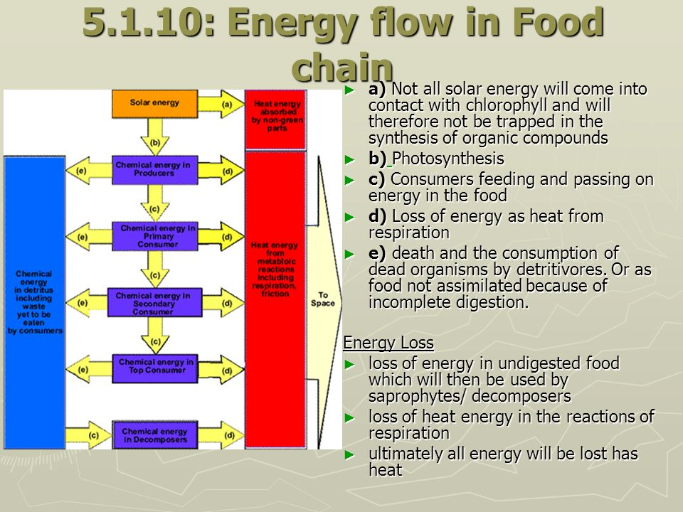 5.1.10: Energy flow in Food chain