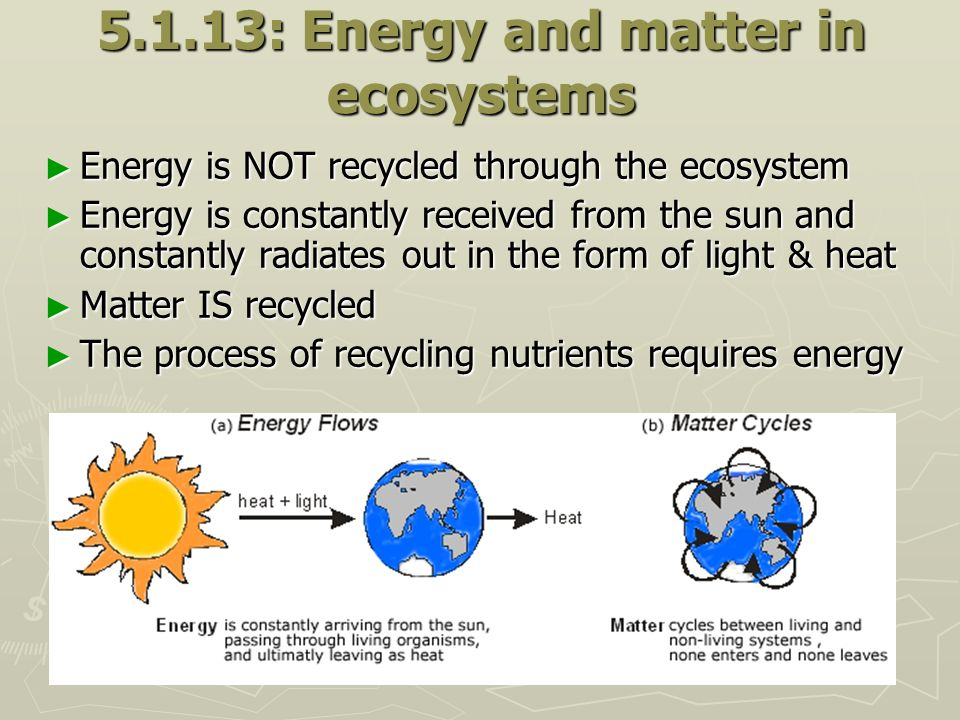 5.1.13: Energy and matter in ecosystems