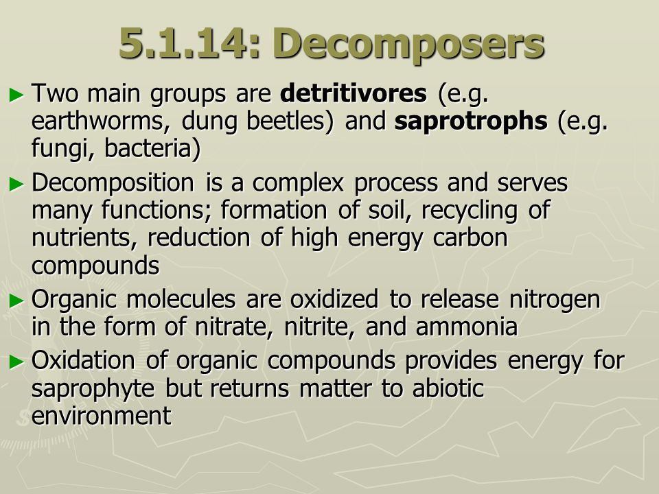 5.1.14: Decomposers Two main groups are detritivores (e.g. earthworms, dung beetles) and saprotrophs (e.g. fungi, bacteria)