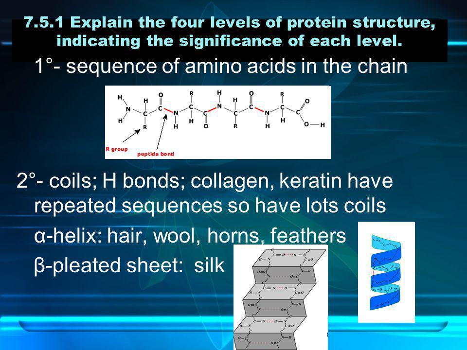 1°- sequence of amino acids in the chain
