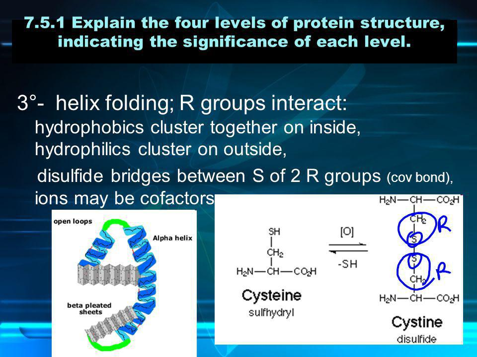 7.5.1 Explain the four levels of protein structure, indicating the significance of each level.