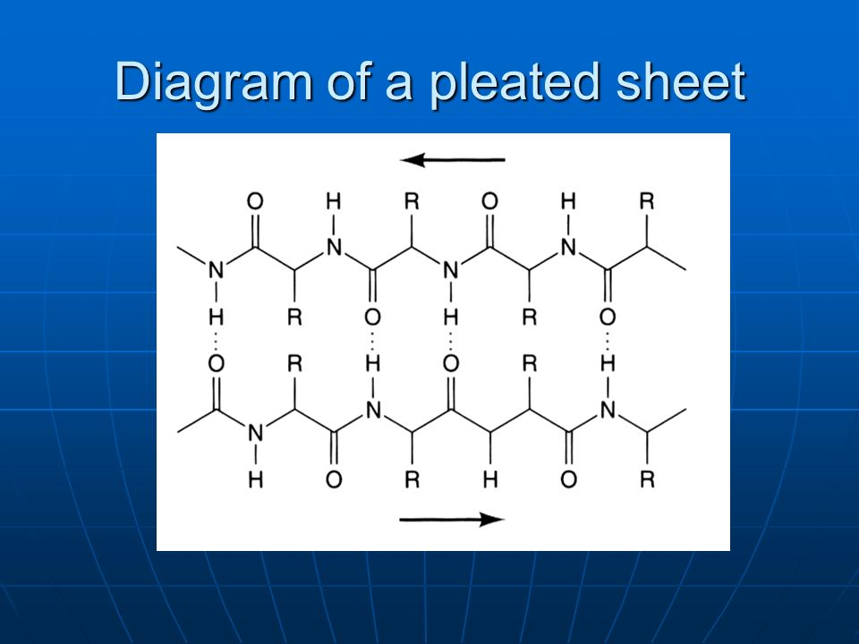 Diagram of a pleated sheet