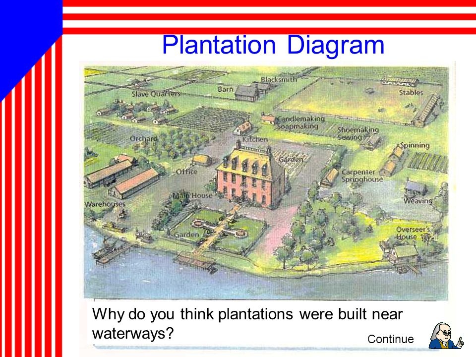 Plantation Diagram Why do you think plantations were built near waterways Continue