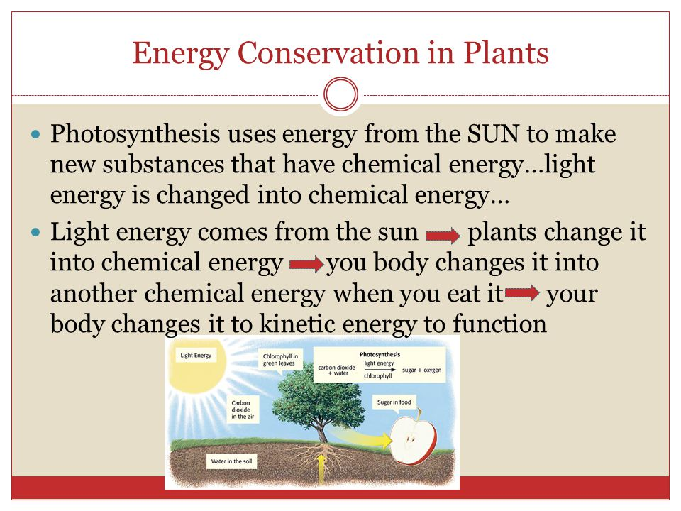 Energy Conservation in Plants