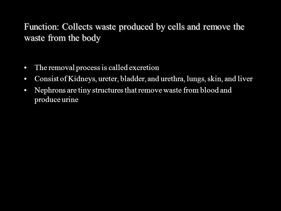 Function: Collects waste produced by cells and remove the waste from the body