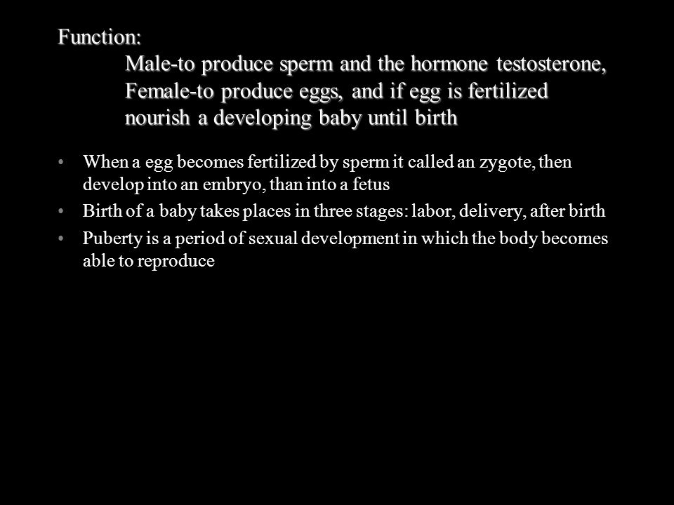Function:. Male-to produce sperm and the hormone testosterone,