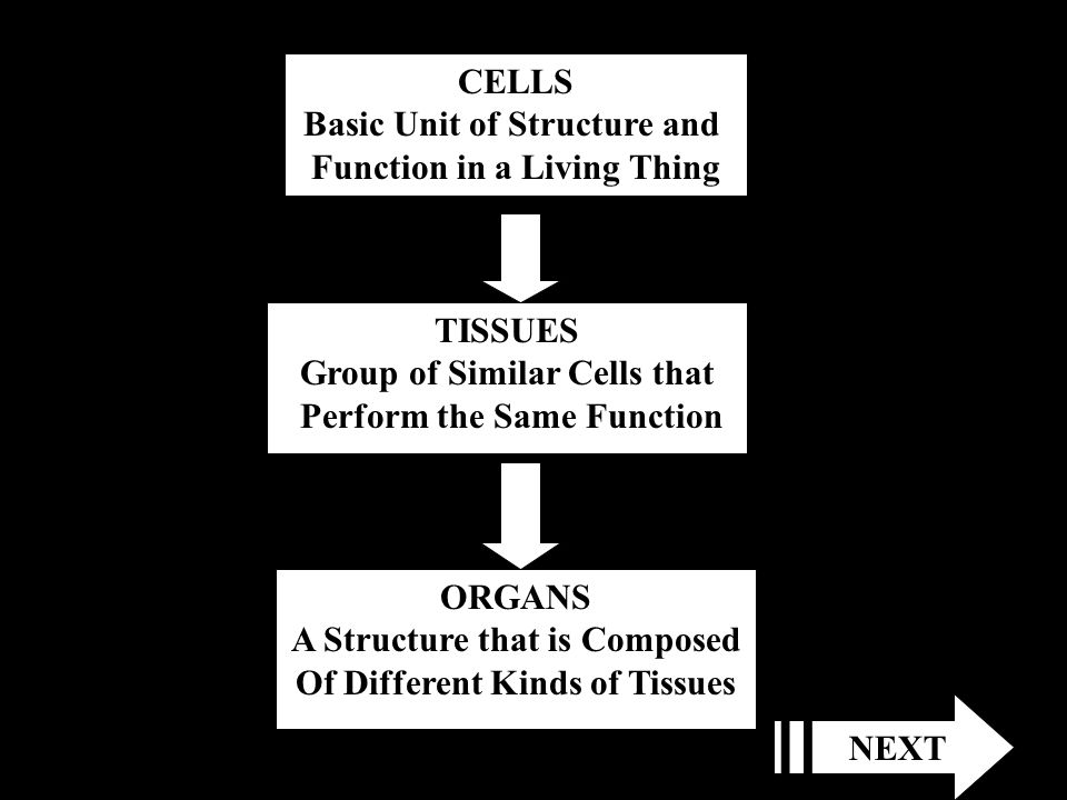 Basic Unit of Structure and Function in a Living Thing