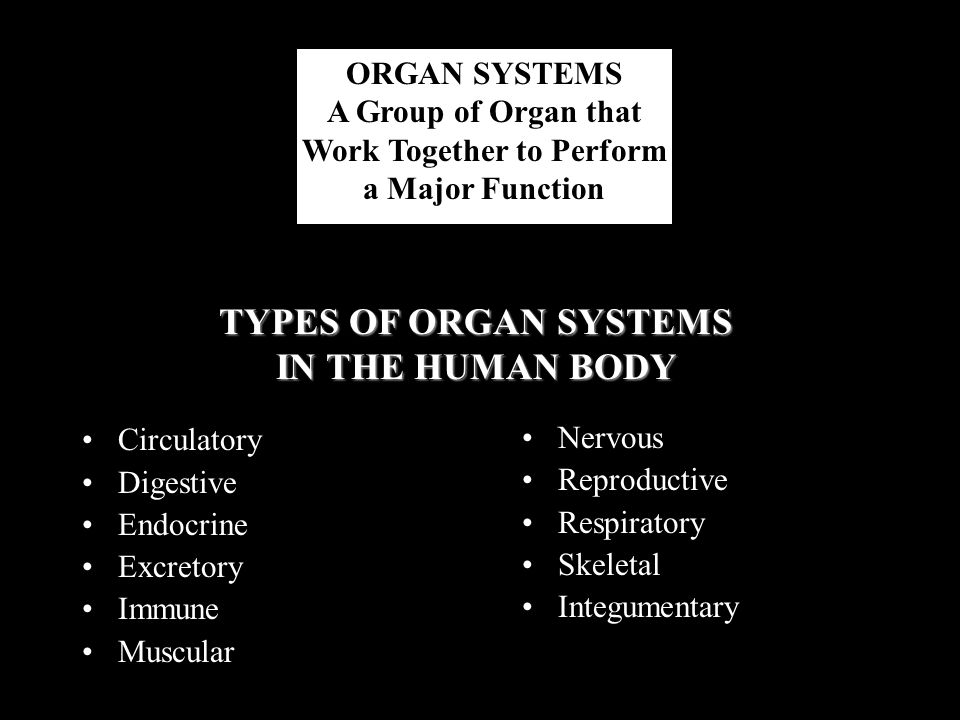 Work Together to Perform TYPES OF ORGAN SYSTEMS IN THE HUMAN BODY