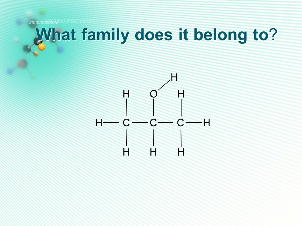 What family does it belong to