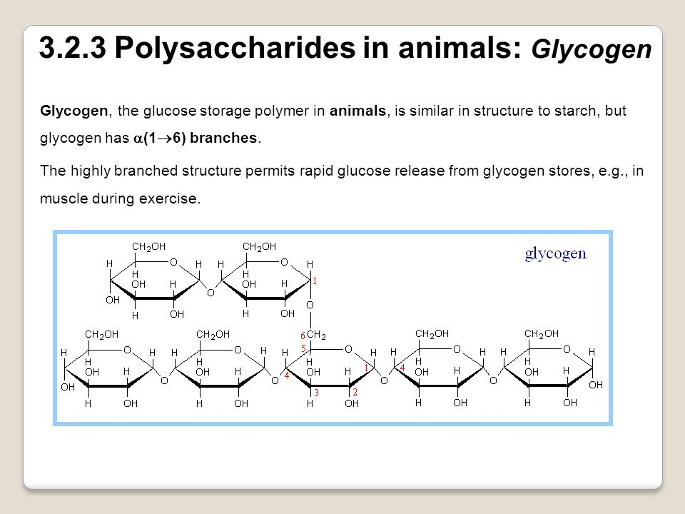 3.2.3 Polysaccharides in animals: Glycogen