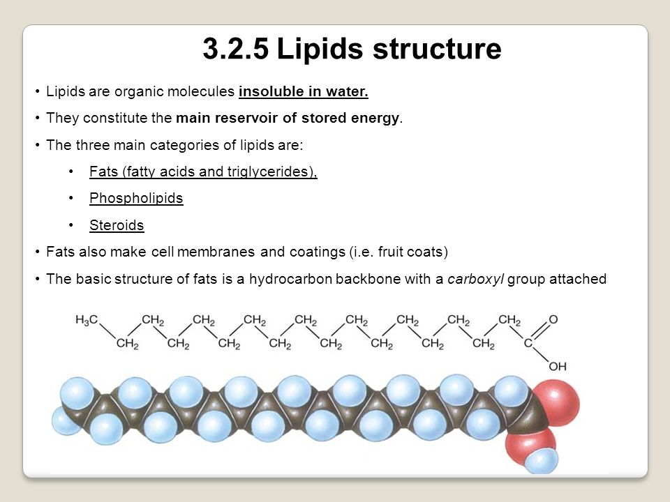 3.2.5 Lipids structure Lipids are organic molecules insoluble in water. They constitute the main reservoir of stored energy.