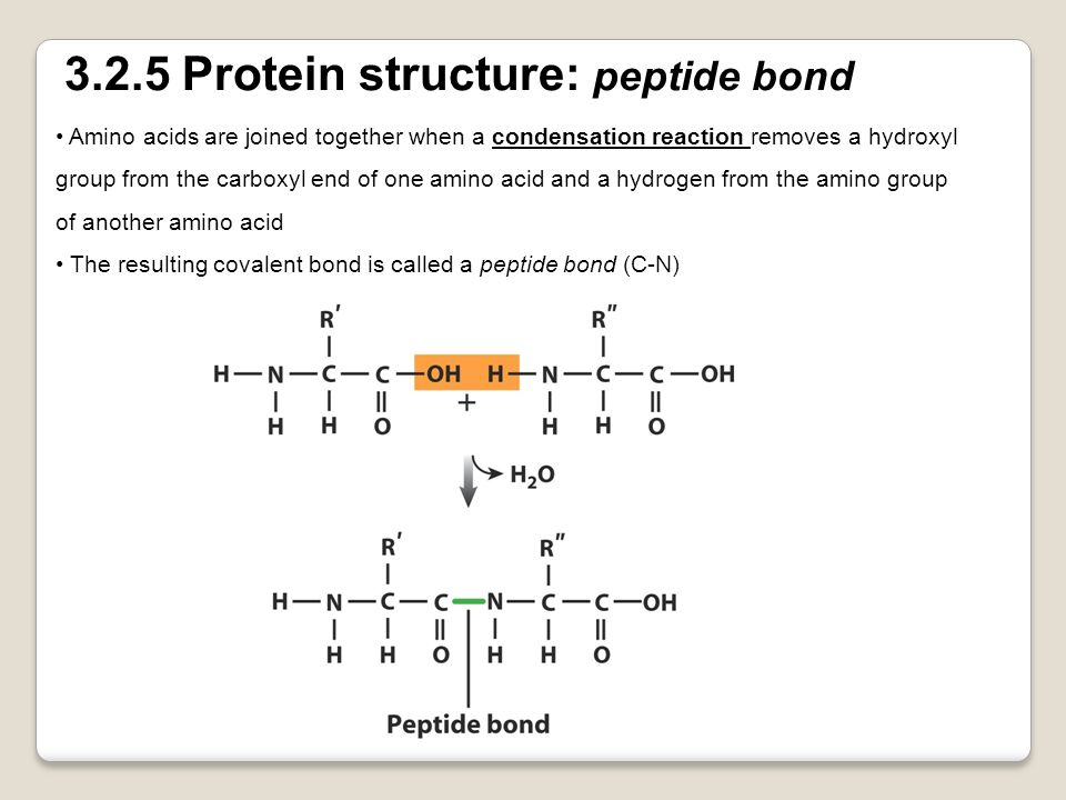 3.2.5 Protein structure: peptide bond