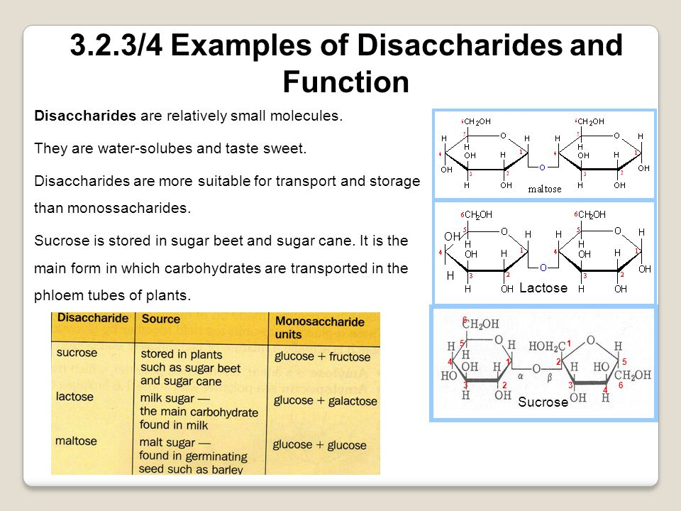 3.2.3/4 Examples of Disaccharides and Function