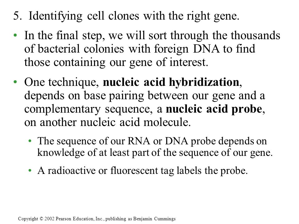 5. Identifying cell clones with the right gene.