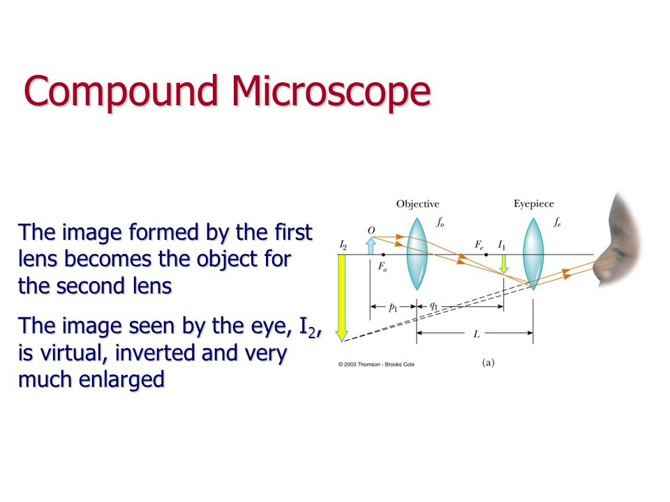 Compound Microscope The image formed by the first lens becomes the object for the second lens.