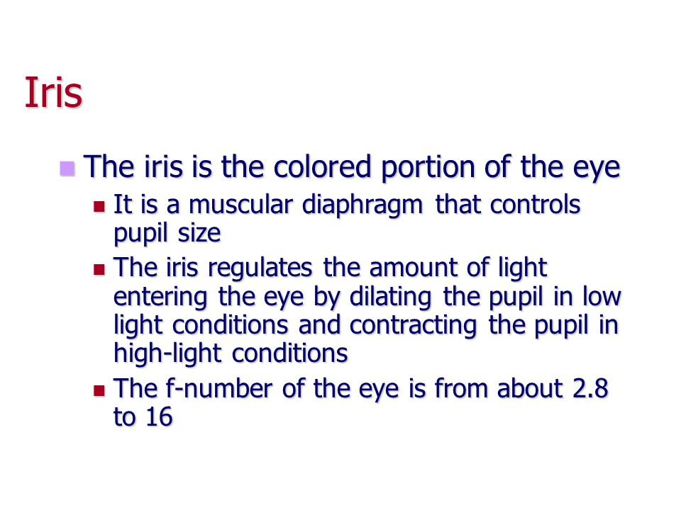 Iris The iris is the colored portion of the eye