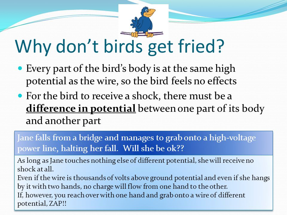 Why don't birds get fried