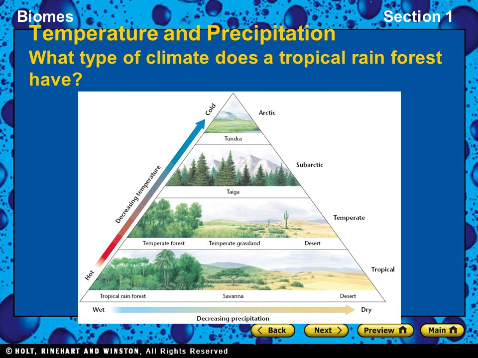Temperature and Precipitation What type of climate does a tropical rain forest have