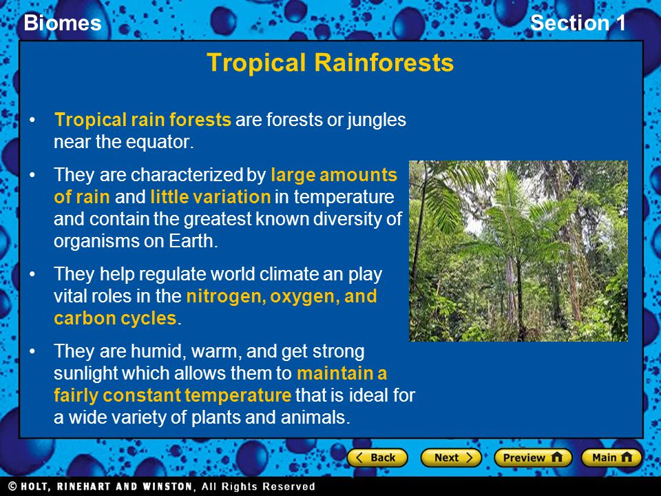 Tropical Rainforests Tropical rain forests are forests or jungles near the equator.