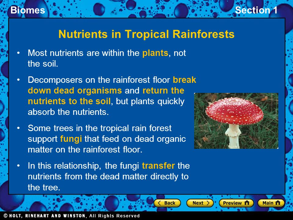 Nutrients in Tropical Rainforests