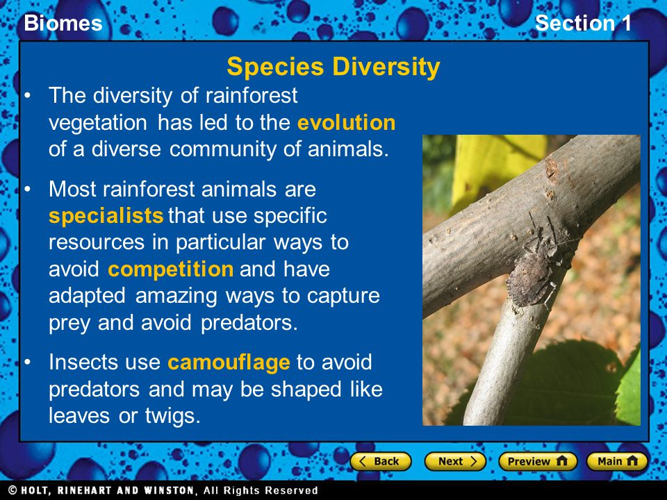 Species Diversity The diversity of rainforest vegetation has led to the evolution of a diverse community of animals.