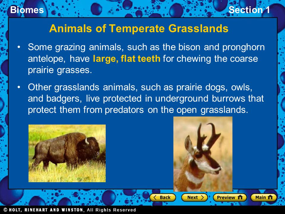 Animals of Temperate Grasslands