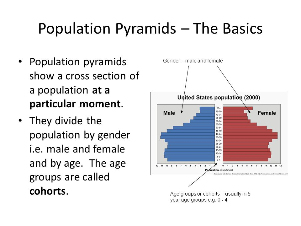 Population Pyramids – The Basics