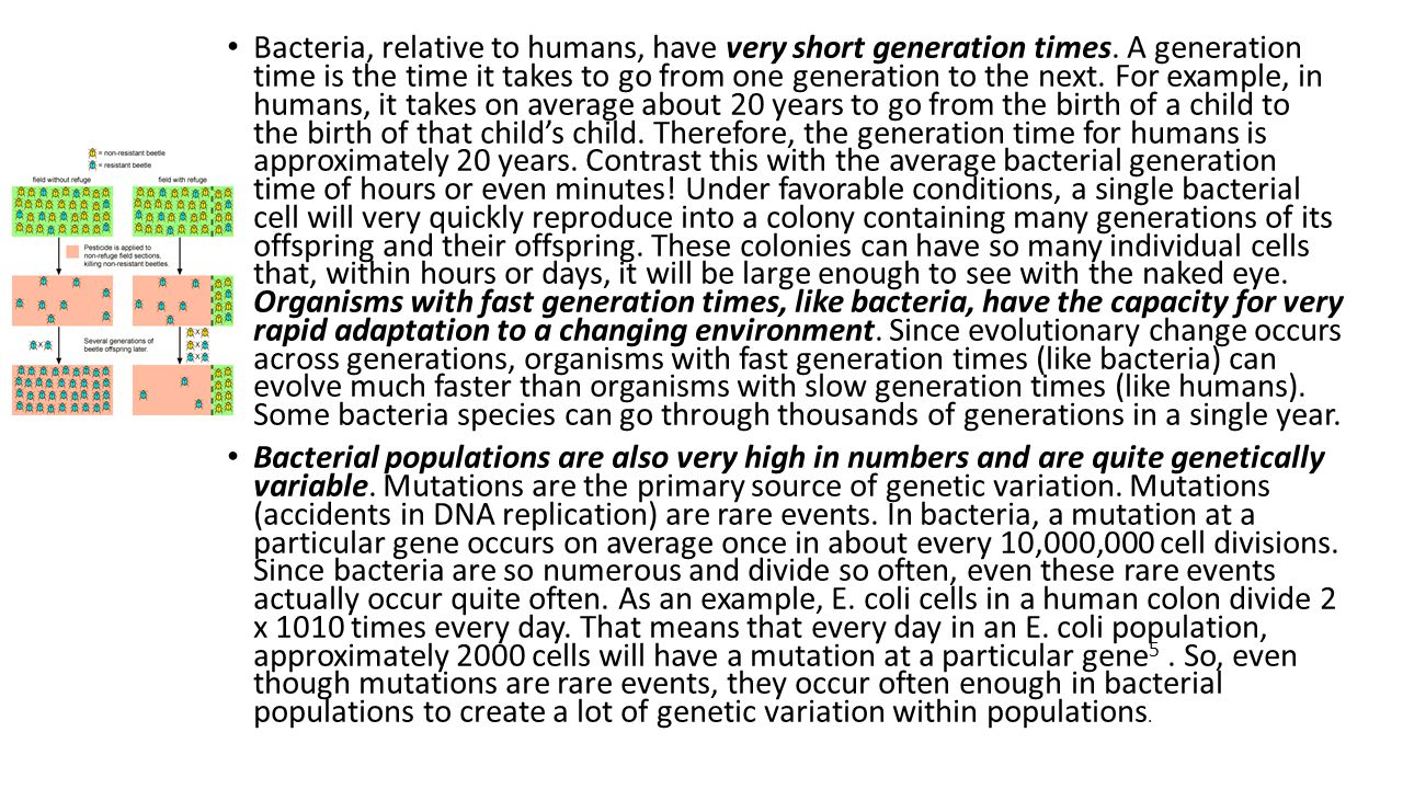 Bacteria, relative to humans, have very short generation times