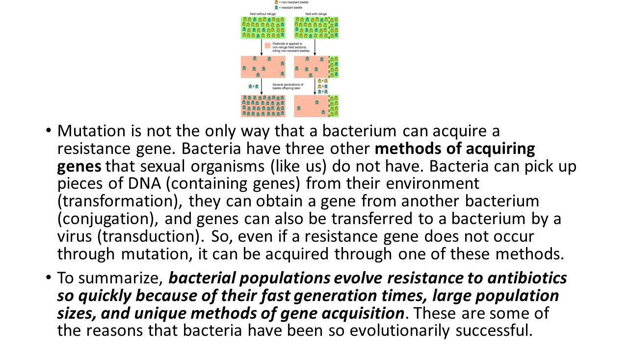 Mutation is not the only way that a bacterium can acquire a resistance gene. Bacteria have three other methods of acquiring genes that sexual organisms (like us) do not have. Bacteria can pick up pieces of DNA (containing genes) from their environment (transformation), they can obtain a gene from another bacterium (conjugation), and genes can also be transferred to a bacterium by a virus (transduction). So, even if a resistance gene does not occur through mutation, it can be acquired through one of these methods.