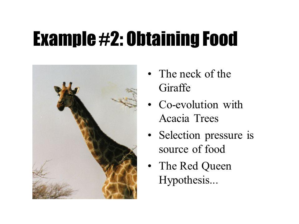 Example #2: Obtaining Food