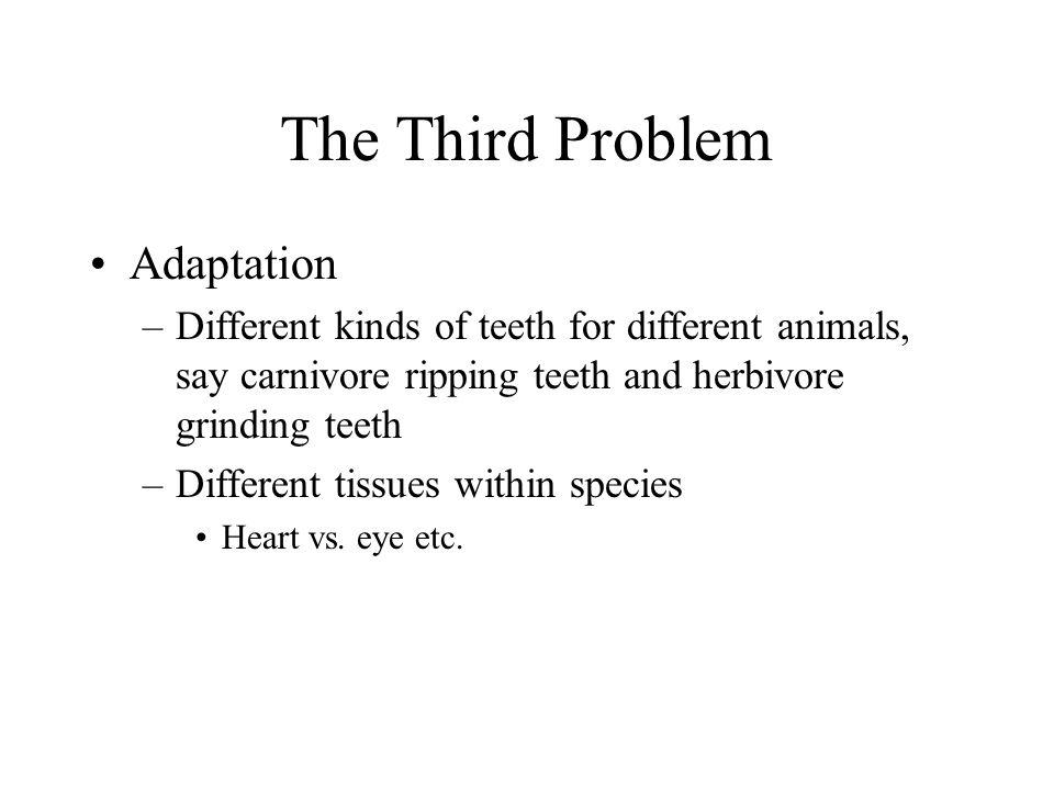 The Third Problem Adaptation