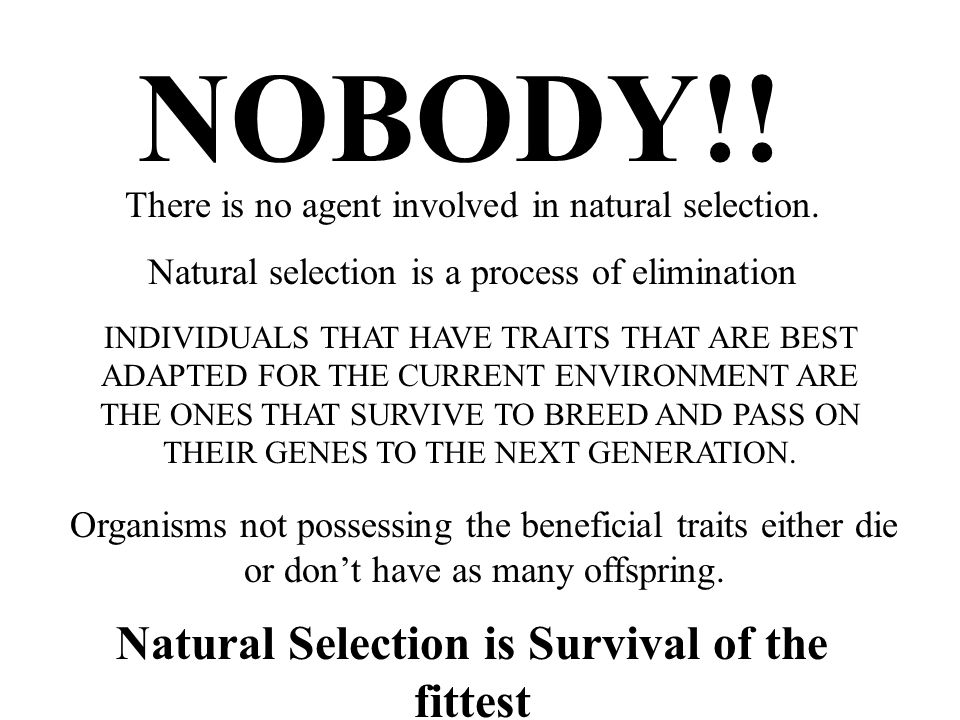 Natural Selection is Survival of the fittest